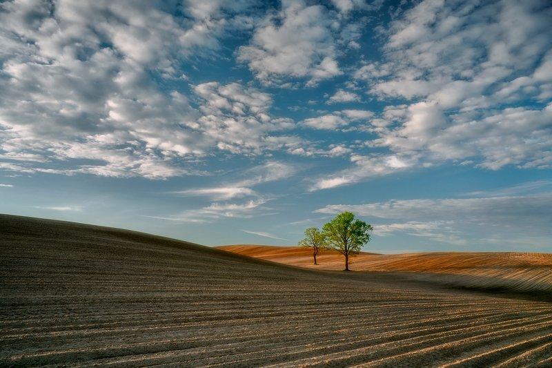 landscape Rural landscape IIphoto preview