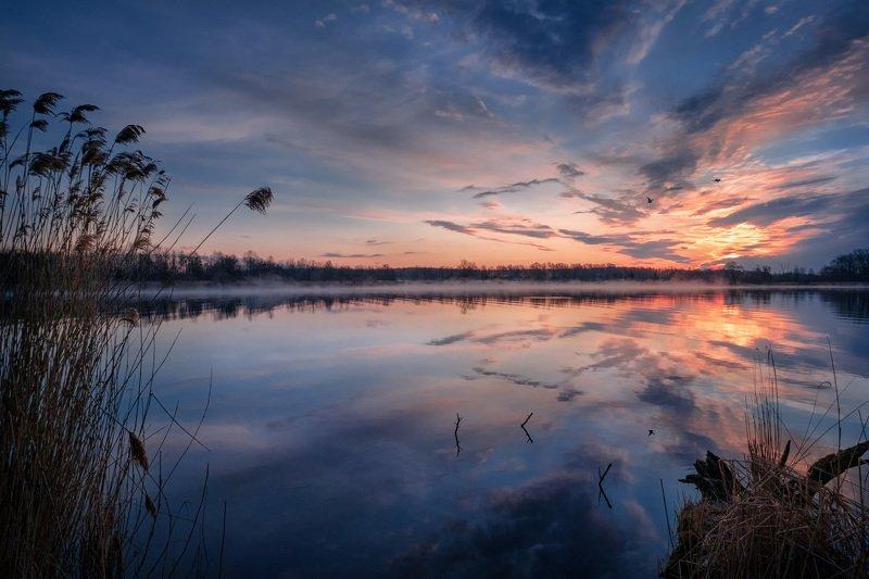 шатура, озеро, утро, рассвет, птицы, солнце, свет, небо, облака, туман, дымка, пейзаж Солнце вот-вот фото превью