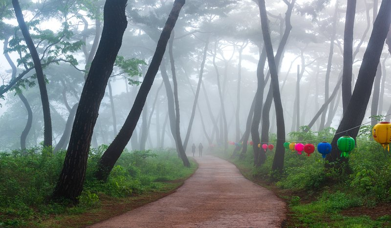spring, forest, place, korea, pine, korea Serenityphoto preview