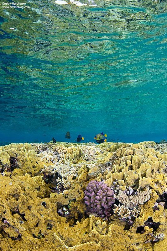 shallow,shallow water,reef,риф,underwater На рифе.photo preview