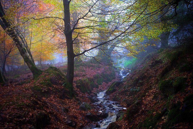 ирландия, туман, лес ***photo preview