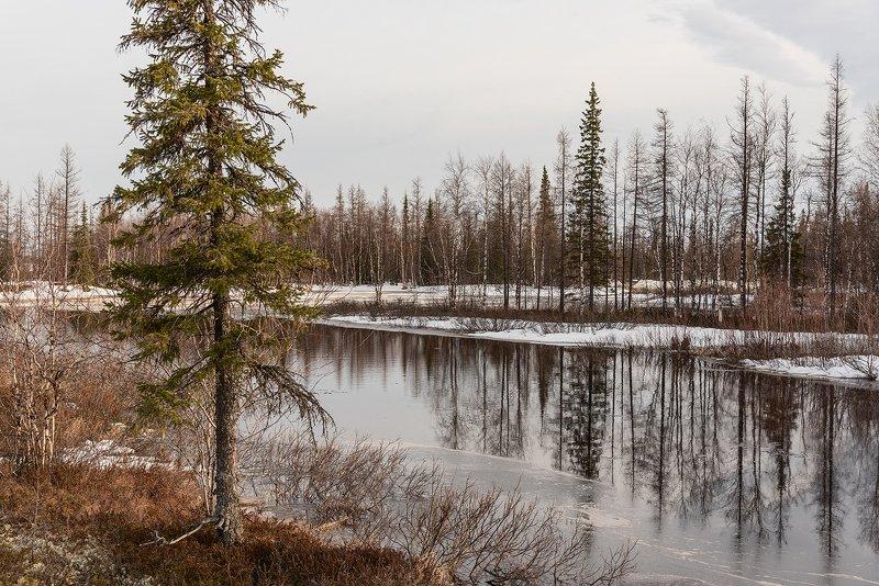 весна, природа, сибирь, янао, ямал, арктика, весна, снег, озеро Веснаphoto preview