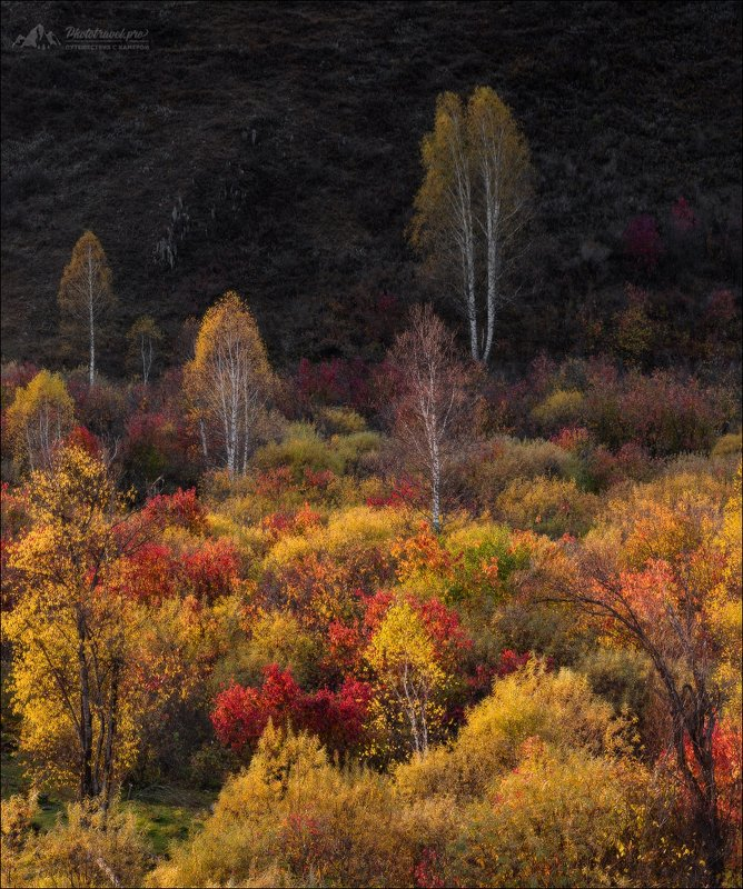 Алтай, Алтайский край, Чарыш, осень, Чарышский район, Осенний этюдphoto preview