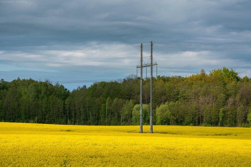 пейзаж, весна, поле Полевой минимализмphoto preview