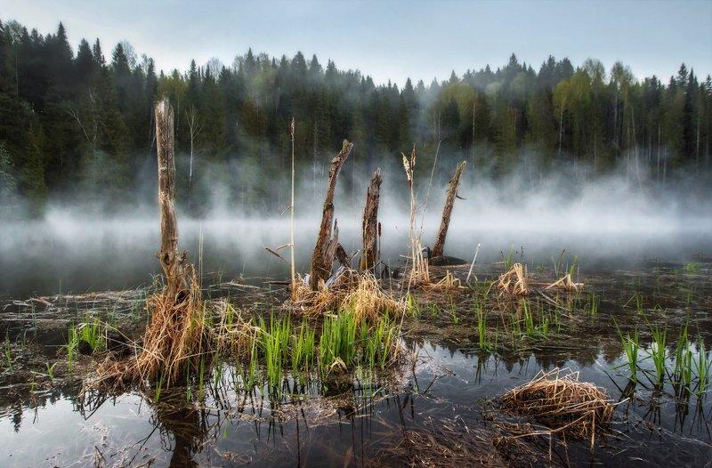 пруд, туман, утро, иней, заморозок, пар, испарение, пейзаж, удмуртия, вода, гладь Утро на прудуphoto preview