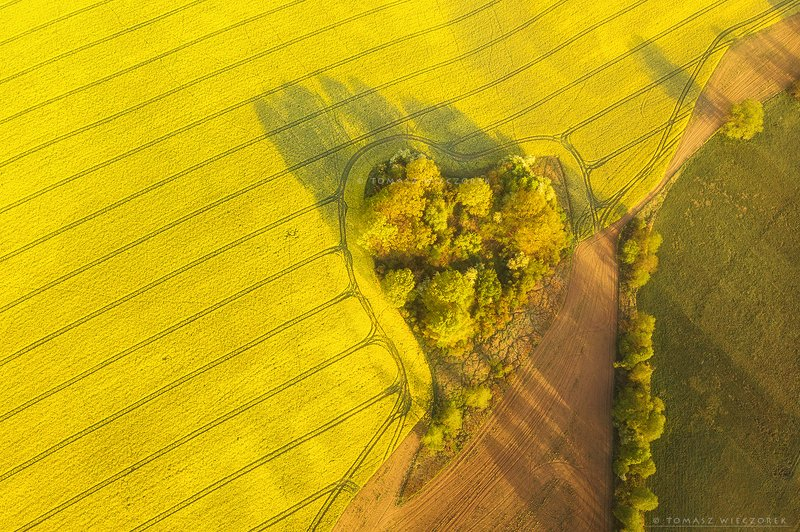 poland, polish, landscape, sunrise, sunset, colours, awesome, amazing, adventure, travel, beautiful, morning, light, colza, fields, heart, love, drone Love is in the airphoto preview