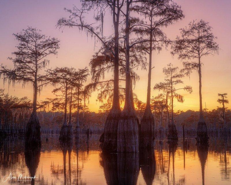кипарис, болото, озеро, отражение, вода, туман, утро, осень, фото-тур, США Закат на кипарисовом болотеphoto preview