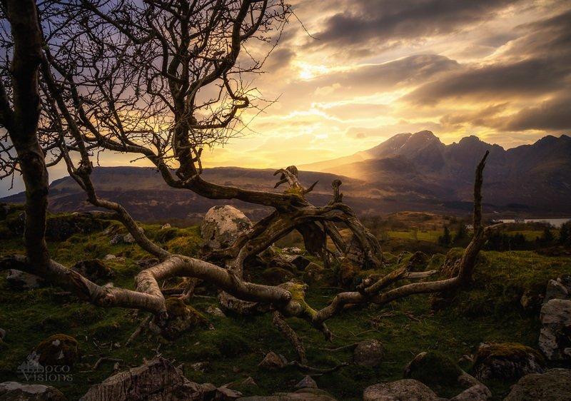 isle of skye,skye,sunset,tree,nature,scotland,scottish,highlands,mountains, Tree ent...photo preview