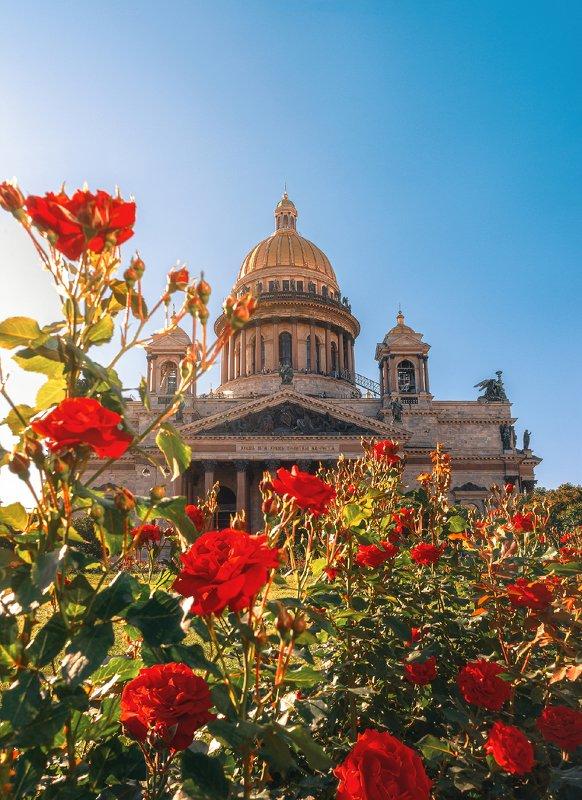 saint isaac\\\'s cathedral, санкт петербург, питер, розы, достопримечательность, город, цветы Saint Isaac\'s Cathedralphoto preview