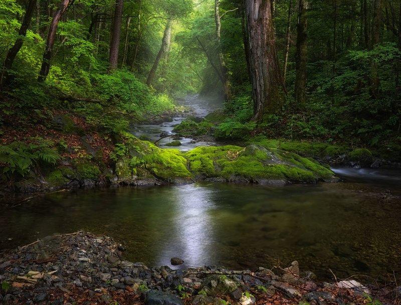 дождь, лето, приморье, ручей, свет, тайга в гостях у тайгиphoto preview