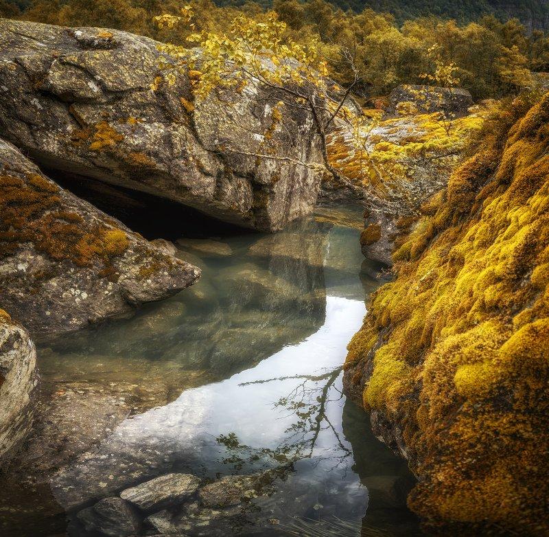 камни, озеро веткаphoto preview