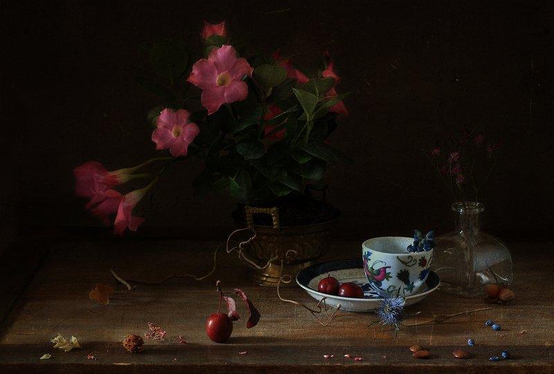 натюрморт .. про цветок в горшке ..photo preview
