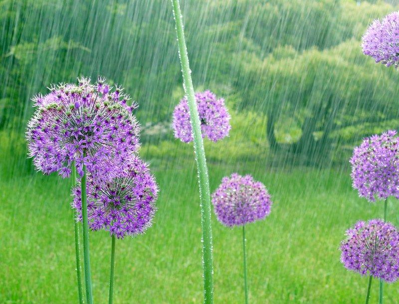 цветы под дождем Май photo preview