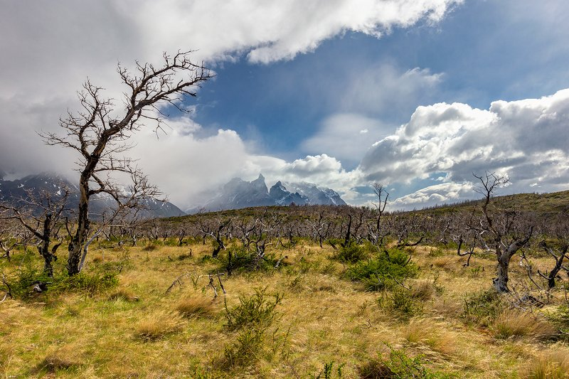 Patagoniaphoto preview