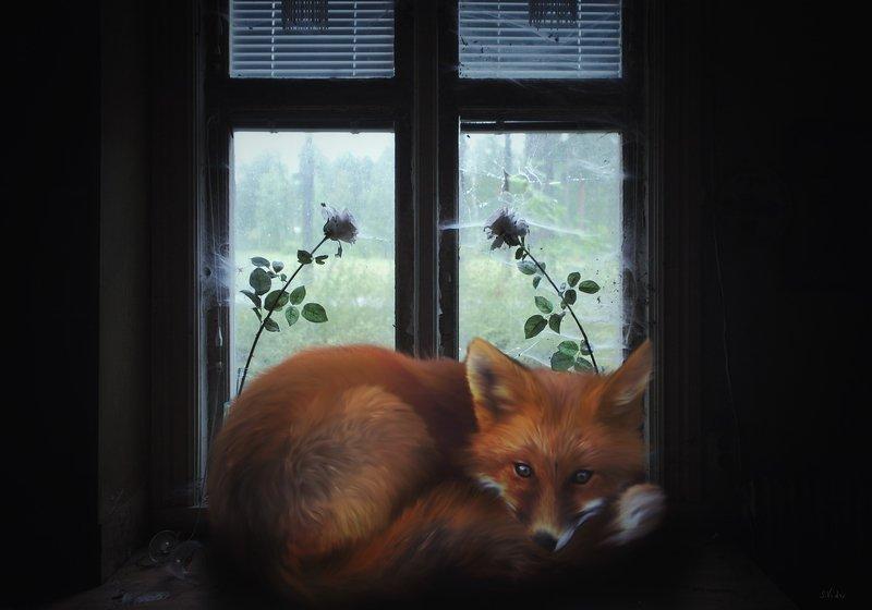 лисенок, комната, окно FOXикphoto preview