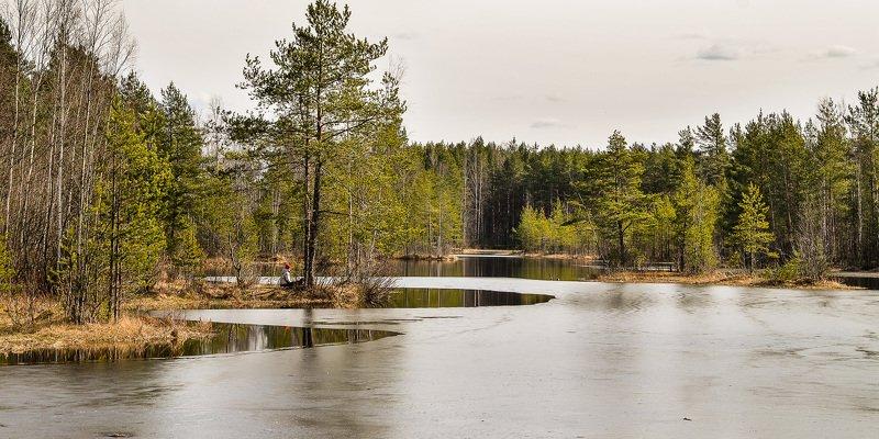 весна, ленобласть, заповедник, заказник, красиво, озеро. В ожидании весны.photo preview