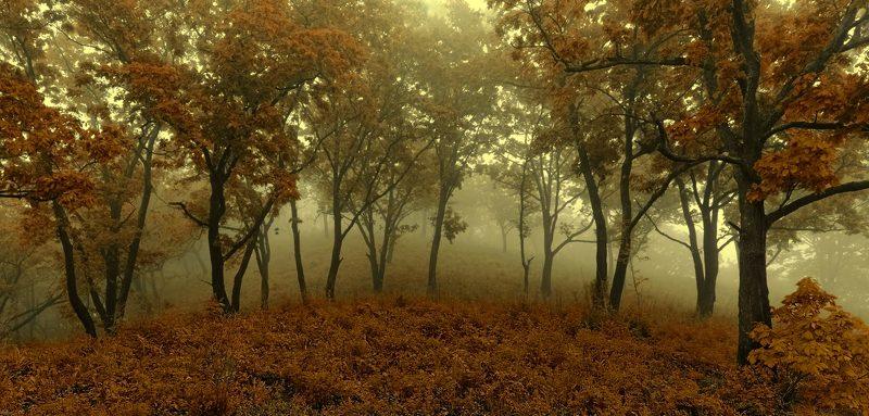 осень, приморье, утро, горный туман fairy forestphoto preview