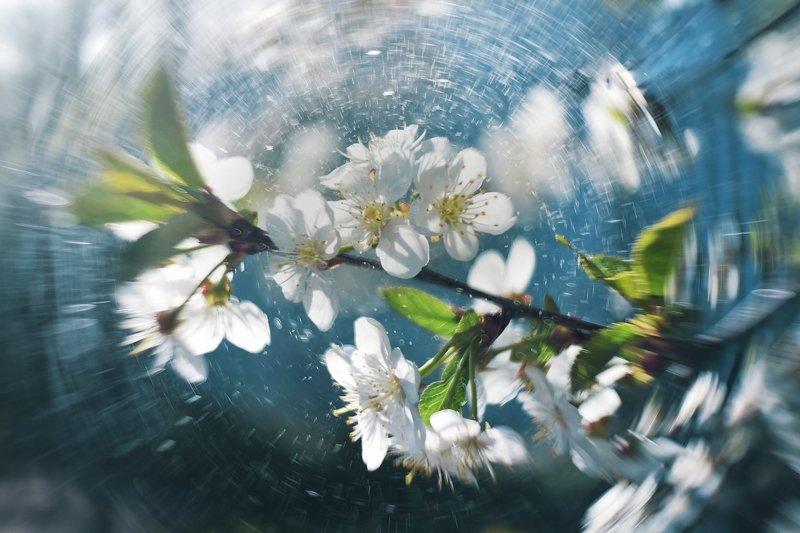 мануальная оптика, никон, цветение, вишня, мир1в Закружилоphoto preview