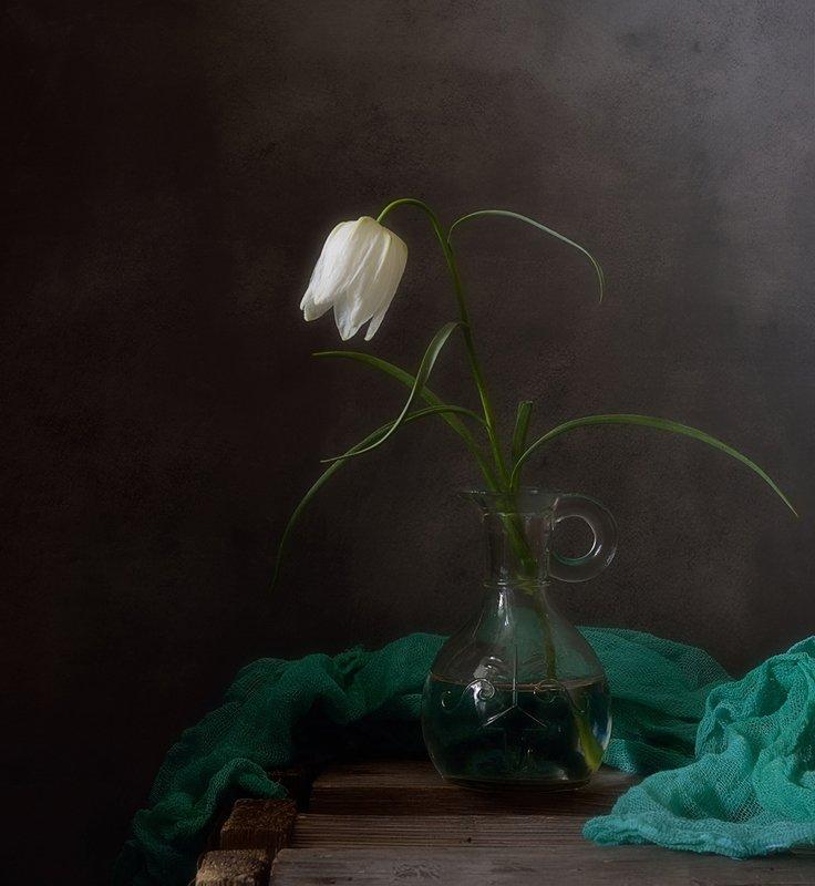 натюрморт,рябчик,цветы,весна с белым рябчиком ) фото превью