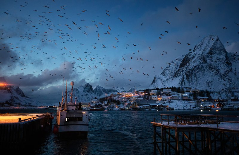 lofoten, night, birds, ship Nightlifephoto preview