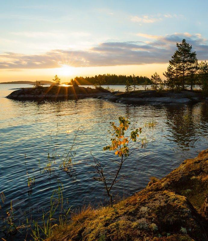 ладожское озеро, карелия, шхеры, лето, остров, берег, вода, рассвет, плавание, путешествие, сосна, берёза, облака, солнце, отражение, Купаясь в лучах солнцаphoto preview