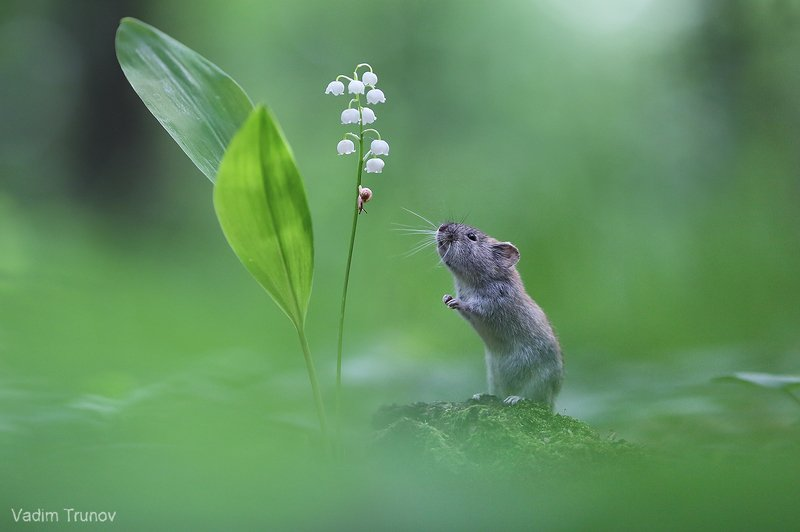 мышь, улитка, ландыш ***photo preview