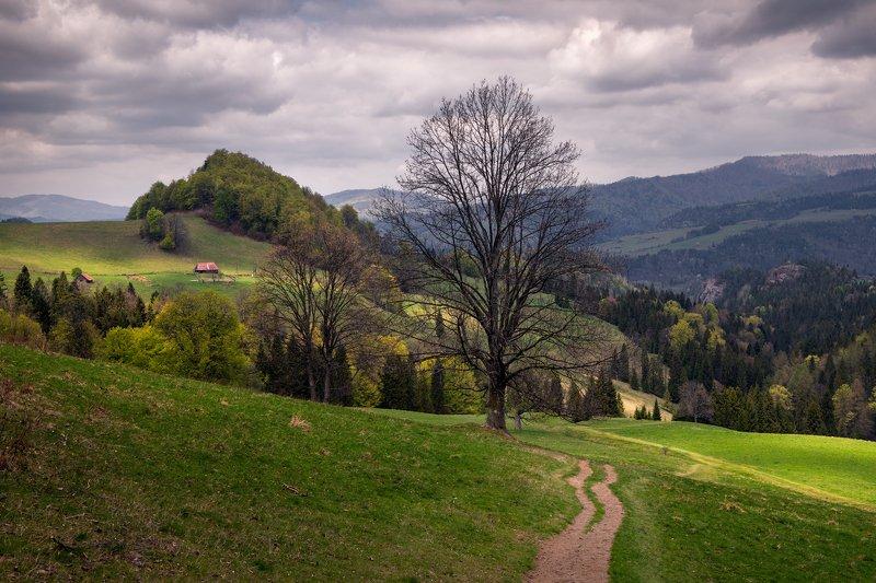 pieniny, nature, landscape, mountains, trees, path, house, light, cloud Pieninyphoto preview