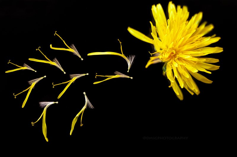 макро, макромир, природа, весна, фон, цвет, цветы, желтый, черный, стекло, безфотошопа ***photo preview