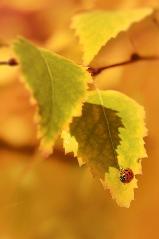 Осень.photo preview