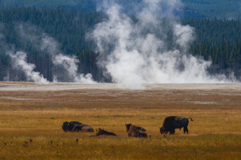 yellowstone. usa, national park Йеллоустонphoto preview