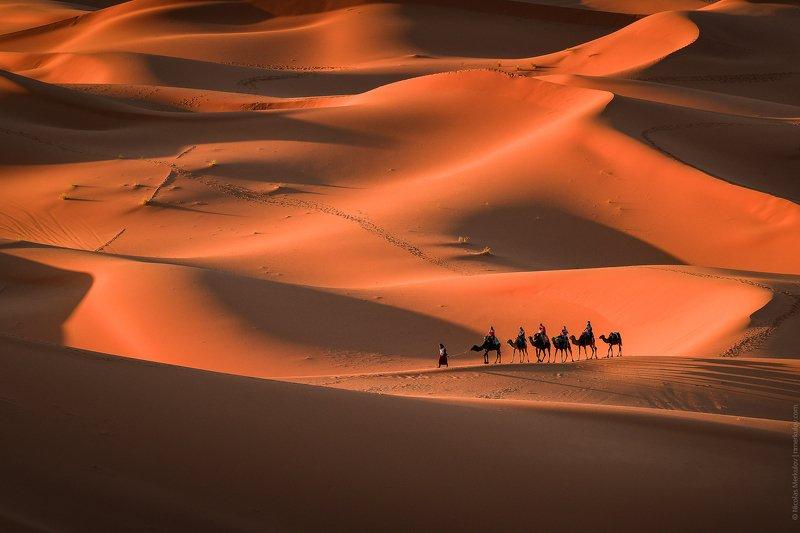 morocco, africa, sahara, desert, caravan, camel, travel, landscape, people, sunset, nmerkulov, nmerkulovphotography Караван в Пустыне Сахара / Camel Caravan in Sahara Desertphoto preview