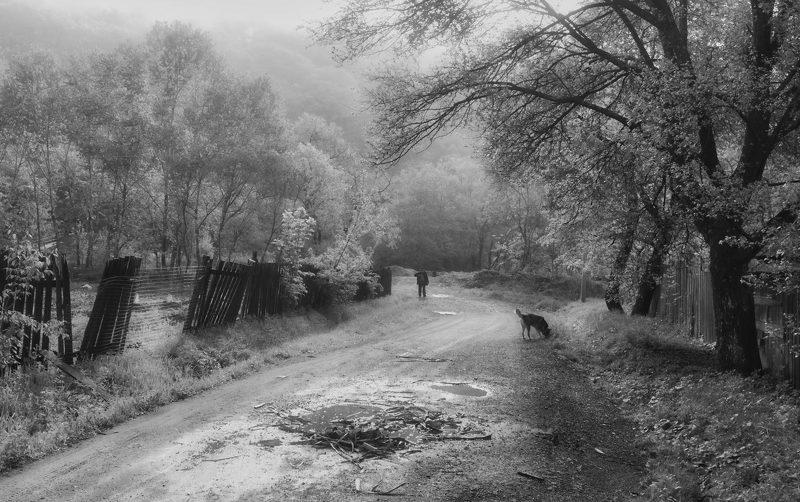 дорога, лето, собака, утро, человек, приморский край утром, по дороге на речку..photo preview