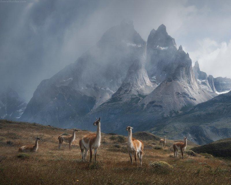 Patagonia Patagonia фото превью