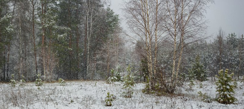 лес снег опушка апрель Опушка леса в снегопадphoto preview