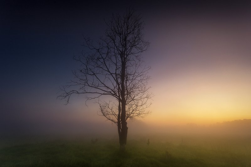 landscape, photo, tree, day, night, sunrise, goldenhour, Day and Nightphoto preview