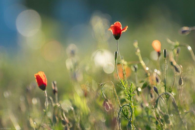 природа, весна, цветы Полевые макиphoto preview
