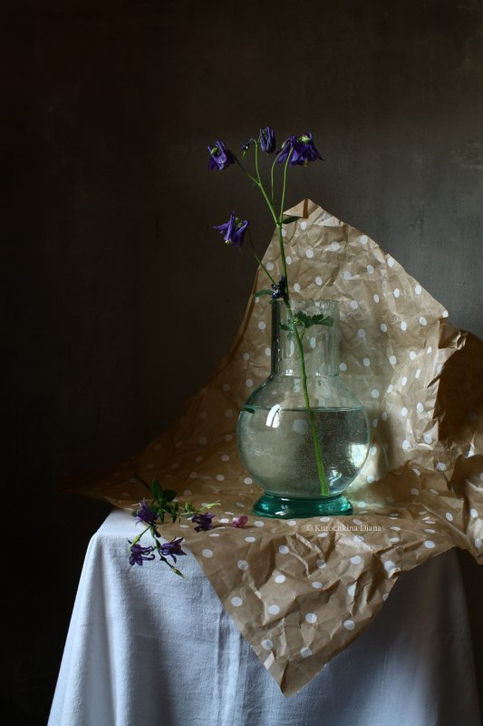 натюрморт, цветы, аквилегия, водосбор, упаковка в горошек *photo preview