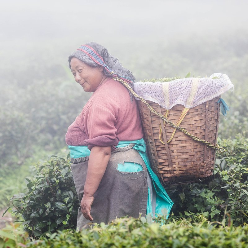 Сборщица чая. Дарджилинг. Индия.photo preview