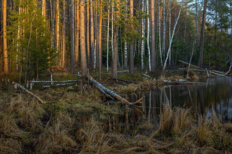 вечер апрель суходол вода закат В закатных лучахphoto preview