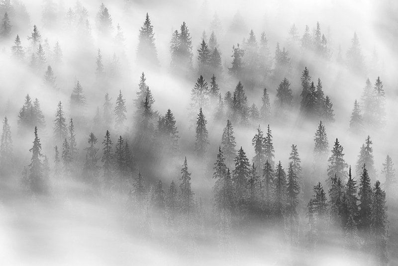 spring, trees, wind, fog, landscape, travel, nature, mountain, romania, cold, morning Dynamic Forestphoto preview