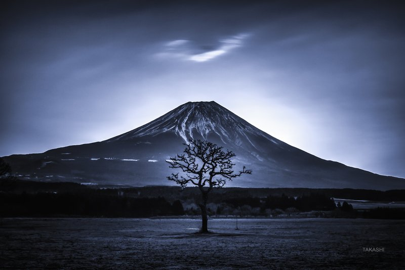Fuji,Japan,mountain,cloud,tree,poem A Tree a Mountain and a Cloudphoto preview