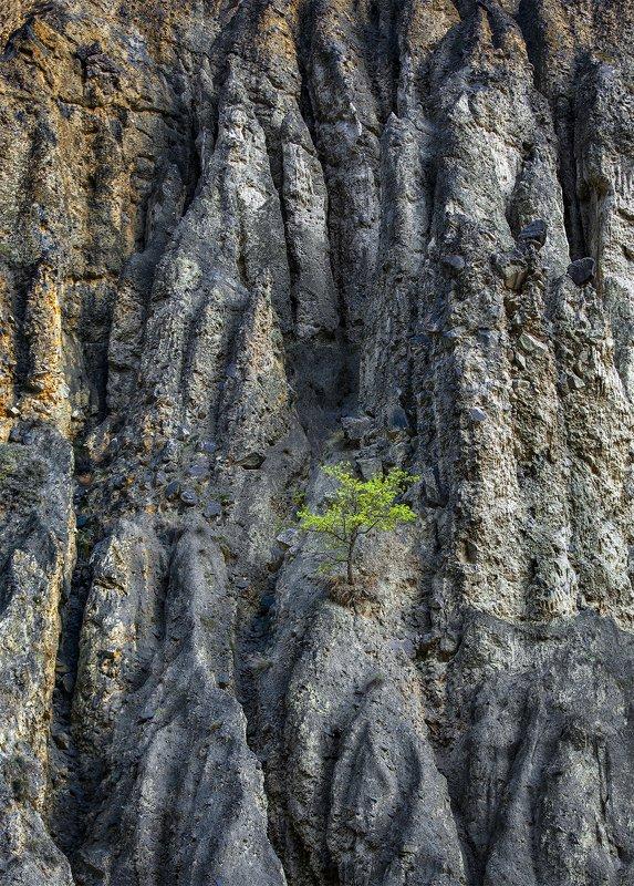 одинокое деревоphoto preview