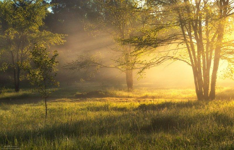 солнце, россия, рассвет, природа, подмосковье, погода, пейзажи, пейзаж, отражение, наукоград, красота, дубна, вода, весна, weather, water, spring, russia, reflection, naukograd, nature, moscow, landscape, dawn, canon, dubna, beauty ***photo preview