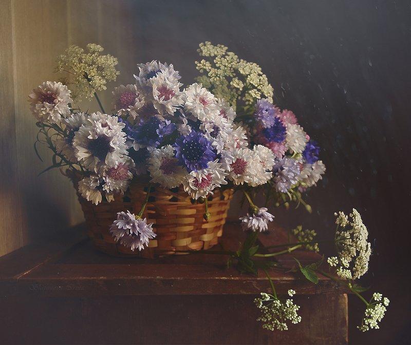 Васильки садовыеphoto preview