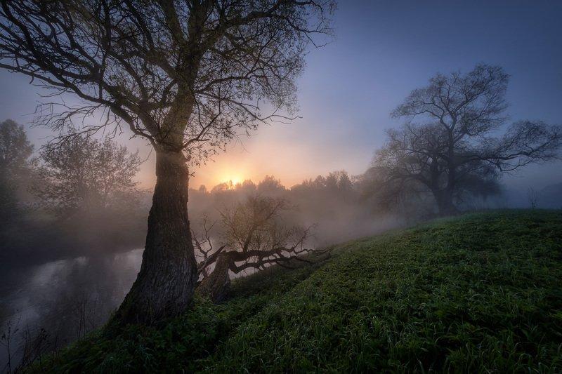 истра, река, пейзаж, рассвет, туман, небо, деревья, утро, тишина Наедине с великанами фото превью