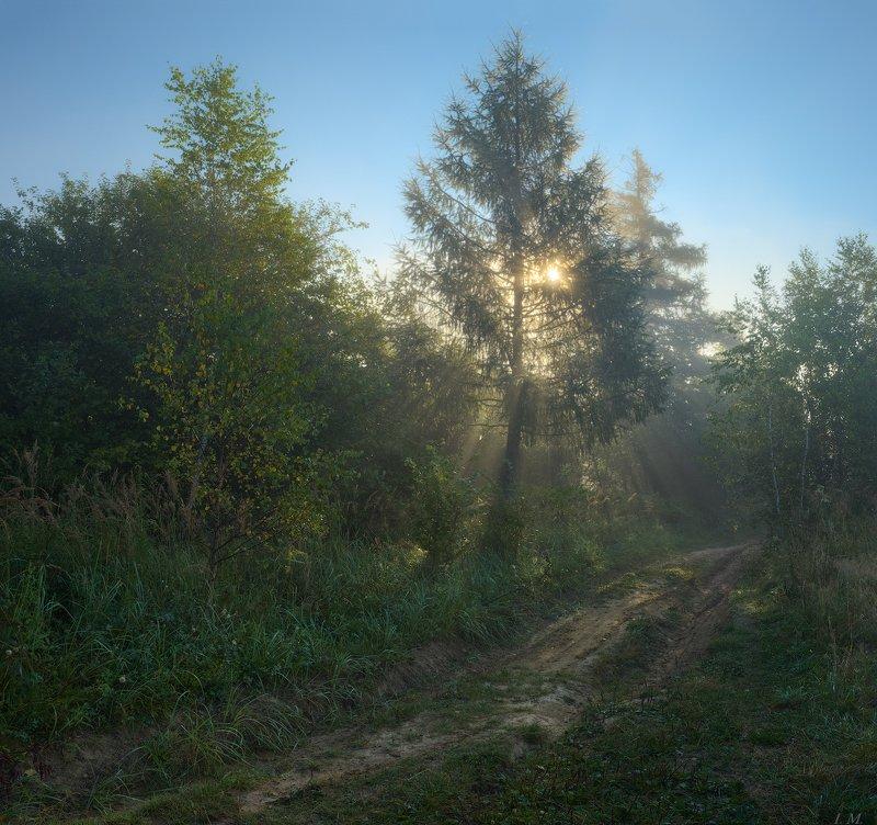 дорожка, ели, лес, лето, лучи, прохлада, рассвет, свет, солнце, туман, утро, fog, forest, light, morning, sun, fairytale, freshness, trees, misty, foggy dawn, rays, foggy, pine trees Путь к сказке ...photo preview