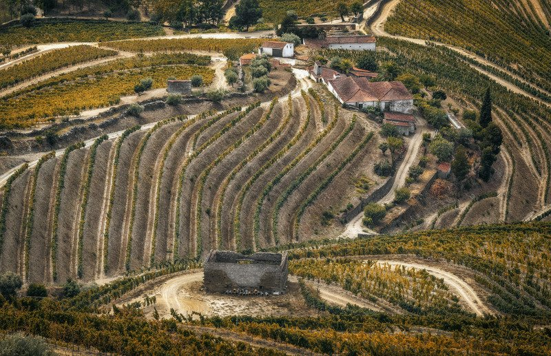 дом, долина, виноград в виноградных волнахphoto preview
