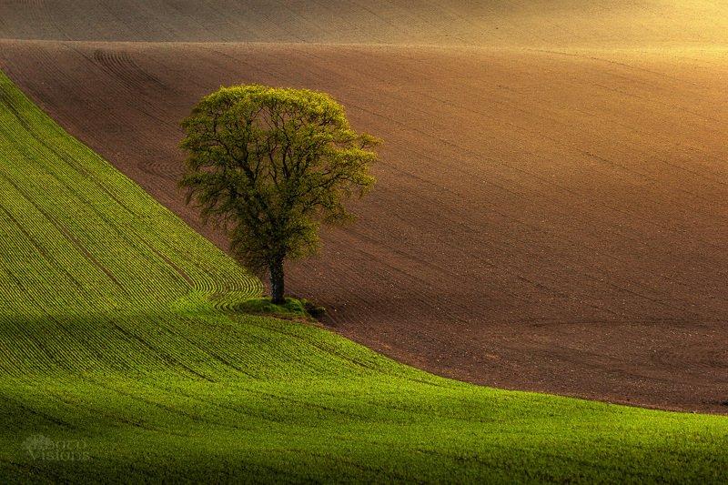 tree,field,rural,light,nature,spring,springtime,norway, Springtime moodsphoto preview