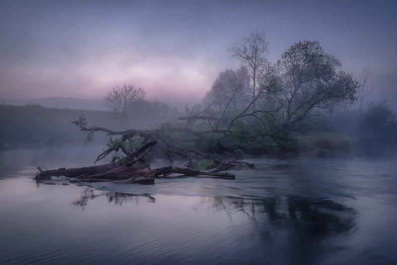 истра, река, утро, рассвет, бурелом, туман, заря После паводка фото превью