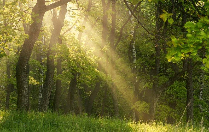 Утренние прогулки за светом.photo preview